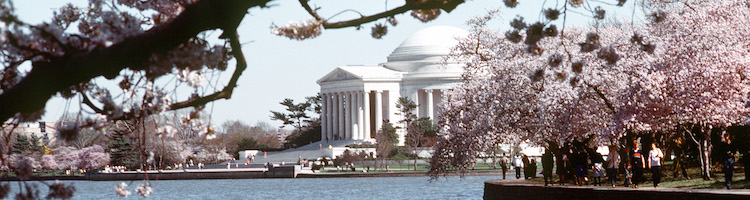 Japanese cherry blossoms along the Tidal Basin framing the Jefferson Memorial